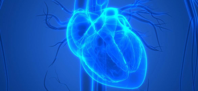 blue heart diagram